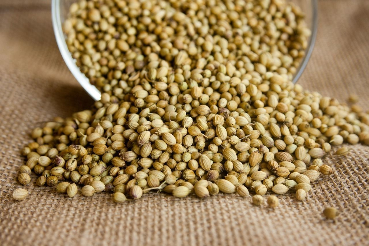 spices-for-the-indian-kitchen-coriander-seeds